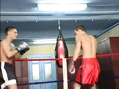 Two Boxers Love to Show Cock